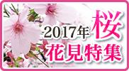 2017年上野公園・隅田公園お花見特集!