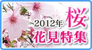 2012年桜花見特集