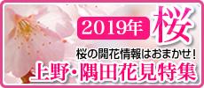 2019年上野公園・隅田公園 お花見特集! お花見スポット&開花状況速報!