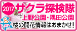 2015年上野公園・隅田公園 お花見特集!