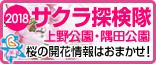 2018年上野公園・隅田公園 お花見特集!