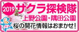 2019年上野公園・隅田公園 お花見特集!