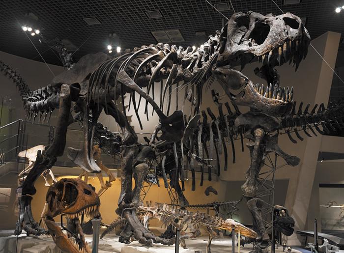 国立科学博物館へ行ってきました!!【G】上野・浅草ガイドネット