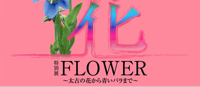 tokubetu_hana_002.jpg