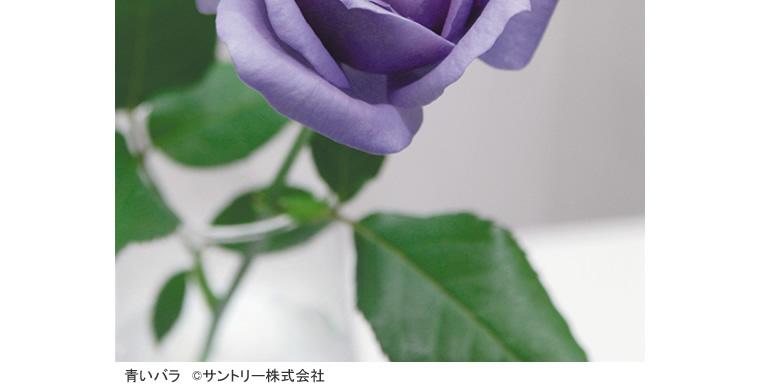 tokubetu_hana_005.jpg