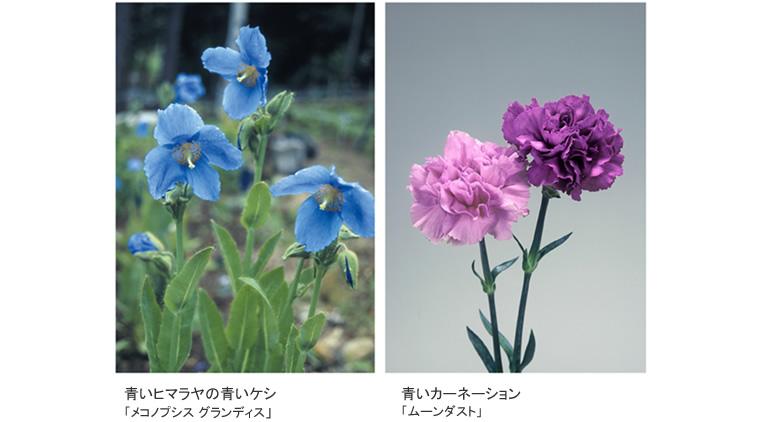 tokubetu_hana_006.jpg