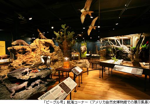「ビーグル号」航海コーナー(アメリカ自然史博物館での展示風景)