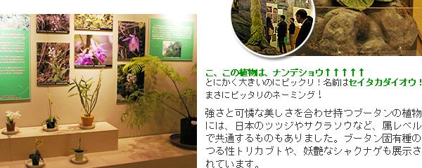 ブータンの植物3