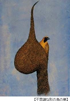 不思議な形の鳥の巣