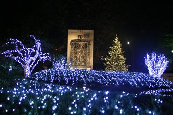 イルミネーション風景2007