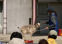飼育係に会いに行こう -4月19日は「飼育の日」-